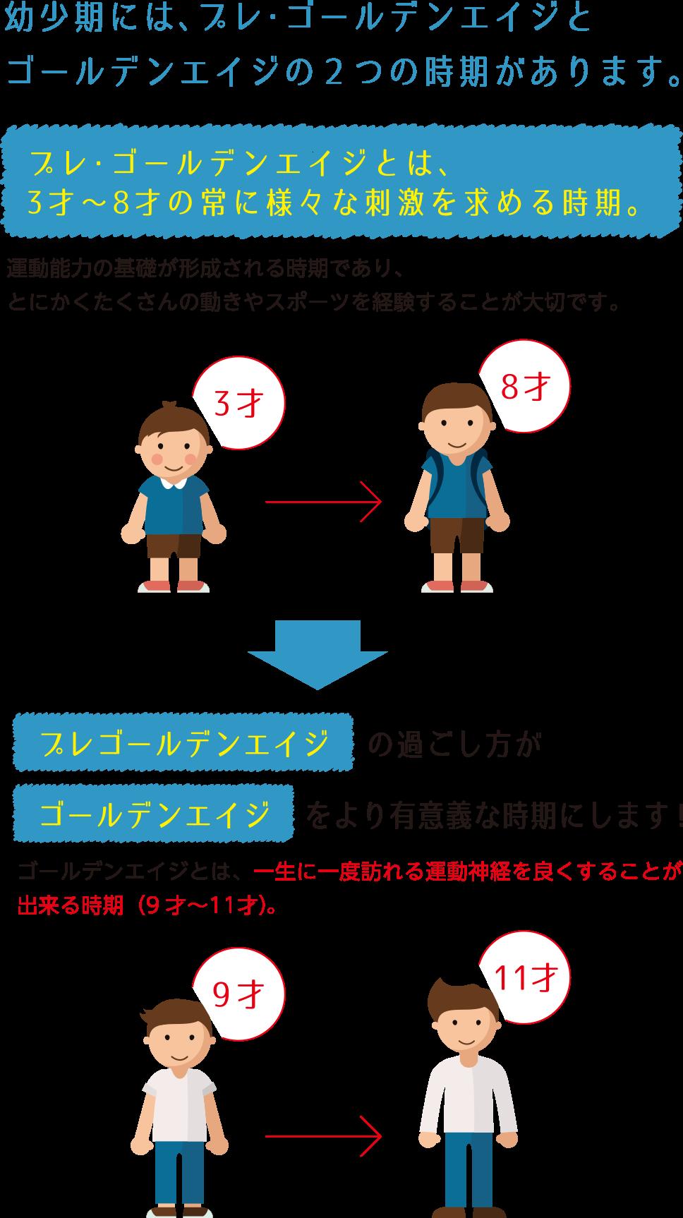 幼少期には、プレゴールデンエイジとゴールデンエイジの2つの時期があります。